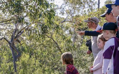 Discover the Bomaderry Creek Walk