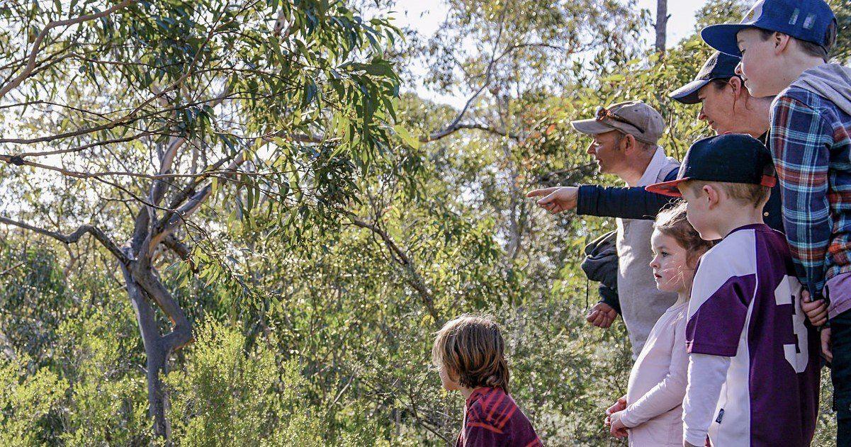 Bomaderry Creek Walk