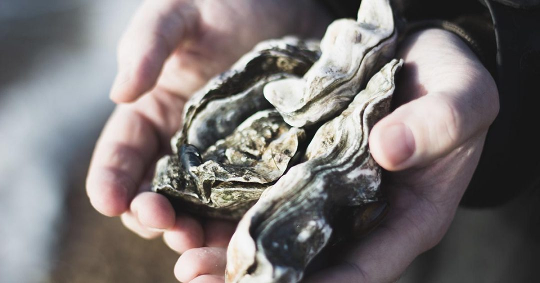 South Coast Oyster Tours