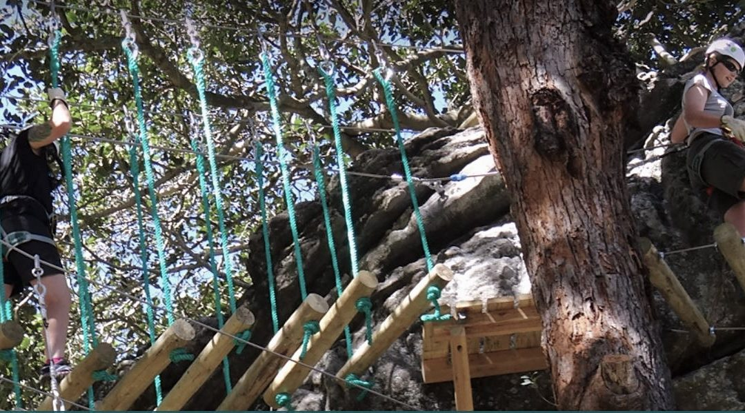 Push your limits at Nowra Trees Adventure