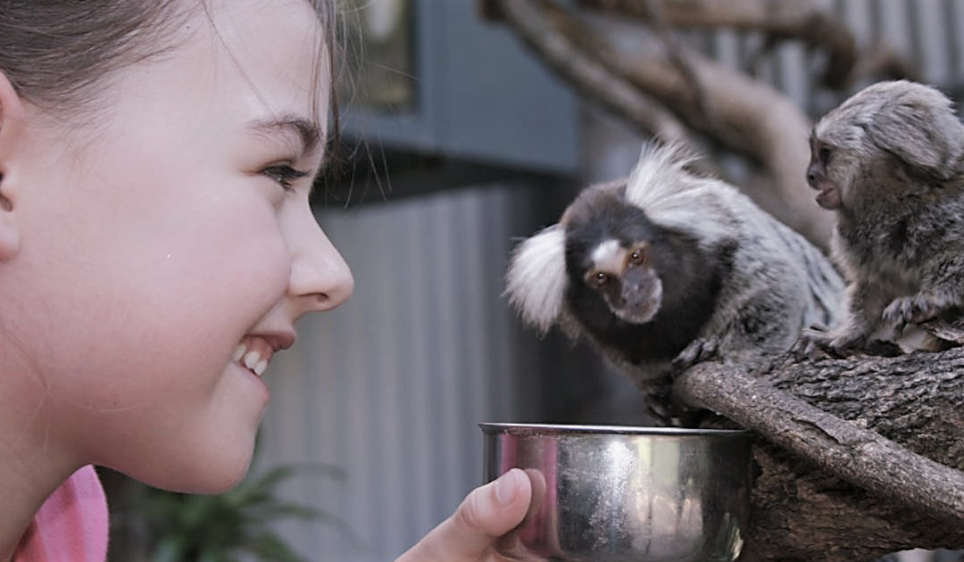 Go wild at the Shoalhaven Zoo